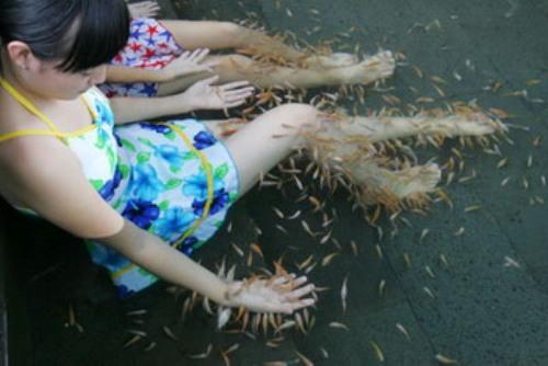 小鱼温泉鱼疗图片